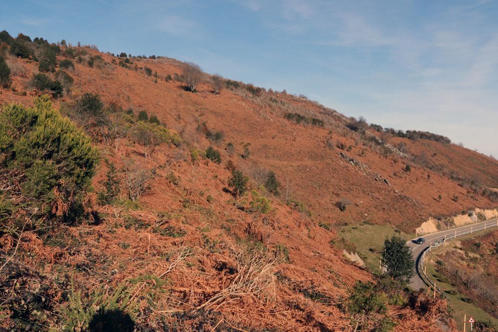 Recuperación de la vegetación en La Cobertoria (Lena)