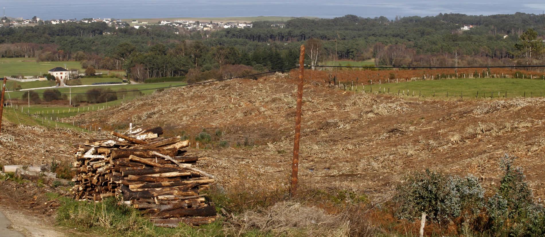 Acumulación de madera tras las talas de los árboles afectados por los incendios