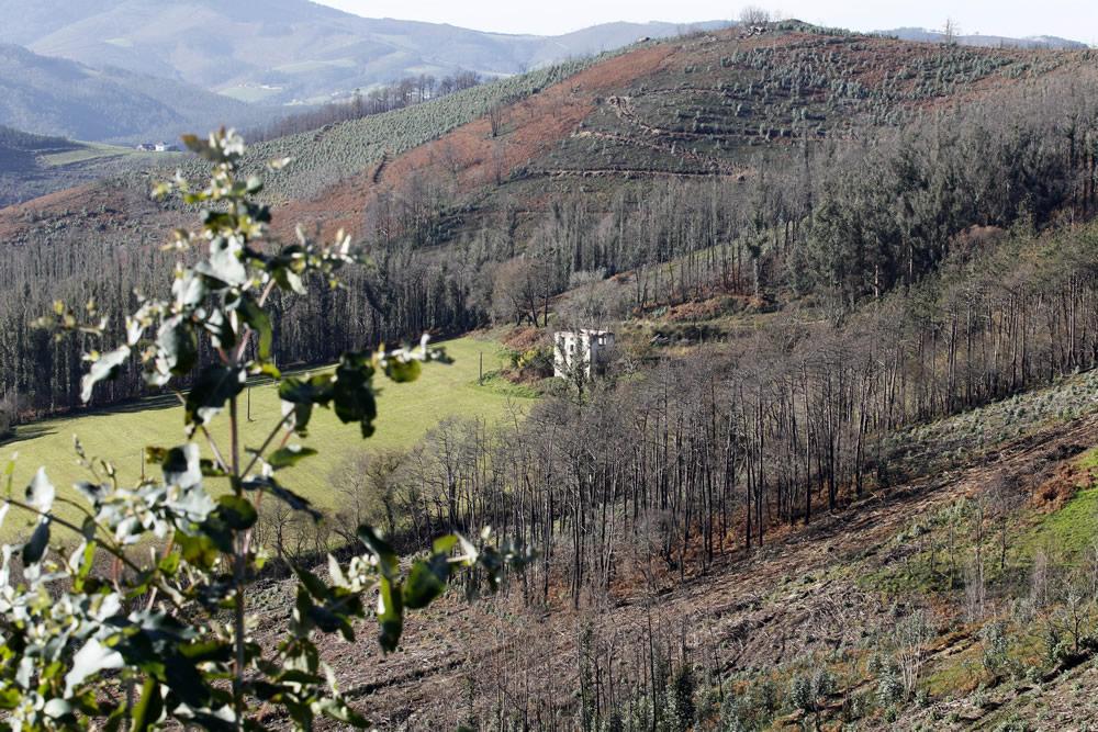 Recuperación de la vegetación en los montes de El Franco